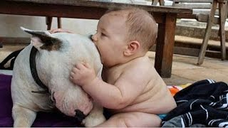 Download Cute Bull terrier Dogs and Adorable Babies - Funny Dog loves baby Compilation Video
