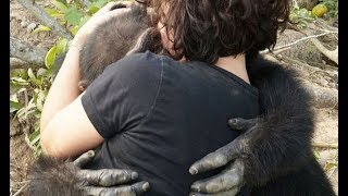 Download Chimp Abandoned On Island Welcomes Rescuers With Open Arms Video
