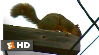 Download A Cat's Tale (2008) - Crazy Squirrels Scene (6/10) | Movieclips Video
