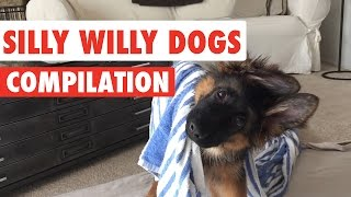 Download Silly Willy Dogs Video Compilation 2016 Video