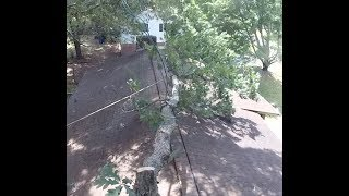 Download Remove a Tree Overhanging a House Without a Crane or Lift (2018) - Part 1 Video