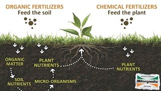 Download What are the Benefits of an Organic Lawn? Video