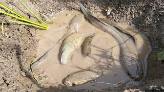 Download A Woman Catching Fish By Hands In Cambodia - Traditional Fishing Video in Khmer Video