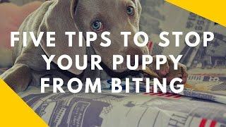 Download Five Tips To Stop Your Puppy From Biting You Video