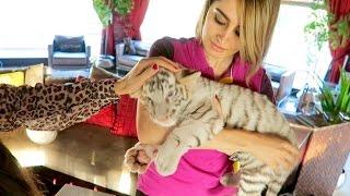 Download Lana's New Pet Tiger !!! Video