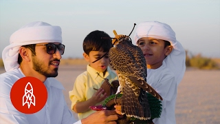 Download Generations of Flying Falcons in Dubai's Desert Video