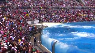 Download Seaworld SHAMU Killer Whale Show Video
