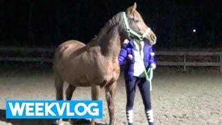 Download WEEKVLOG #1- Bitloos paardrijden! | LeanneAbigail Video