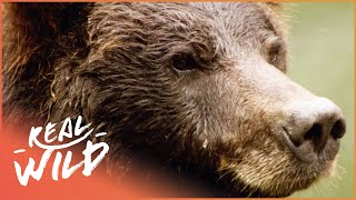 Download Austin Stevens Adventures - Grizzly Bear Stake Out [Documentary Series] | Wild Things Video