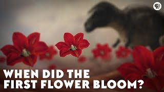 Download When Did the First Flower Bloom? Video