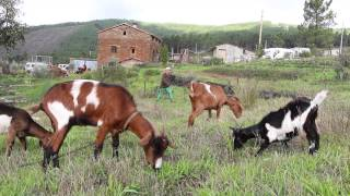 Download Casalinho | permaculture project in central Portugal Video