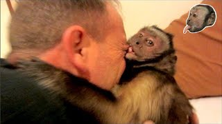 Download Capuchin Monkey Bites Face Video
