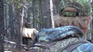 Download 2014 archery elk! Woah 5 yards! Video