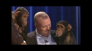 Download Die Affen sind los! - TV total Video