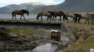 Download Magical Horse Riding Holiday in Iceland Video