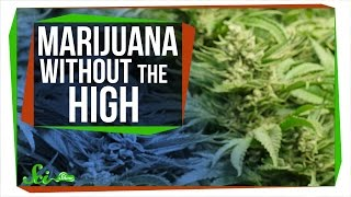 Download CBD: Marijuana Without The High Video