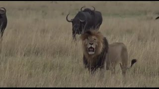 Download Part 1 Safari Live with James Hendry in the Mara Triangle on Sept 22, 2016 Video