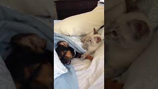 Download The Paw Slapper || ViralHog Video