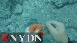 Download Diver finds $1 Million in coins off Florida coast Video
