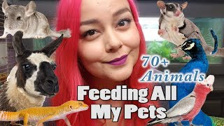Download Feeding All My Pets, Over 70 Animals | Daily Feeding Routine Video