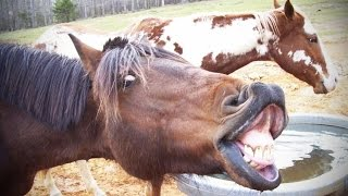 Download NOISY PETS ★ Animals Making FUNNY NOISES [Funny Pets] Video