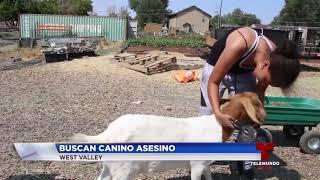 Download Buscan canino que ha estado matando animales de una granja escolar Video