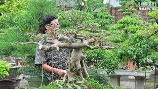 Download Chia sẻ cách Chọn Phôi Cây Cảnh    Nghệ nhân Đặng Xuân Cường Video