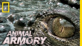 Download Lethal Jaws | Animal Armory Video