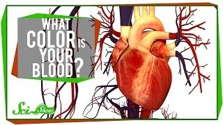 Download What Color is Your Blood? Video