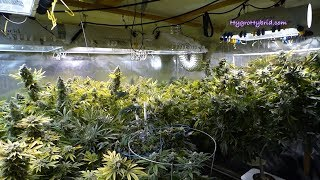 Download DWC Harvest Day 60 Video