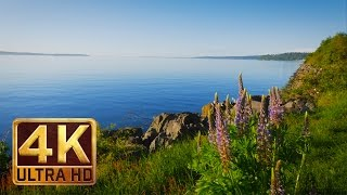 Download 4K Video Nature Sounds for Relaxation & Meditation - DISCOVERY PARK - Seattle (PART 2 - 1.5 HOURS) Video