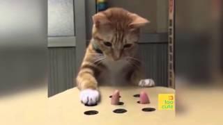Download Beste lustige Katzen und Hunde 2019. Katze schlägt fehl, Hund nicht. Lustige Haustiere . Video