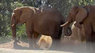 Download Gorgeous Elephant Footage From the San Diego Zoo Video