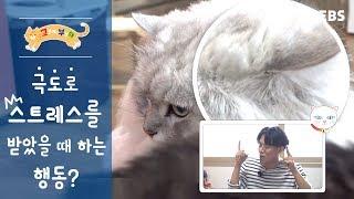 Download [고부해] 고양이가 극도로 스트레스를 받았을 때 행동? Video