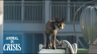 Download Starving Cat Wanders Around Precariously On Top Of An Apartment Railing | Animal in Crisis EP71 Video