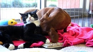 Download Abandoned dog bonds with paralyzed cat Video