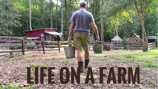 Download Life On A Farm - Morning & Evening Chores - Our Daily Homestead Routine Video
