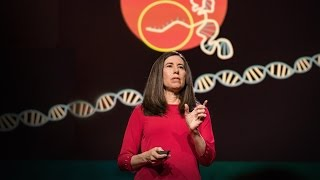 Download What you need to know about CRISPR | Ellen Jorgensen Video