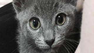 Download 라이징TV live straem - 나른한 오후의 고양이 Video