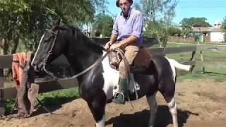 Download TOBIANO NEGRO AGIL-VENDIDO- $ 45.000 LOSBAGUALES.AR Video
