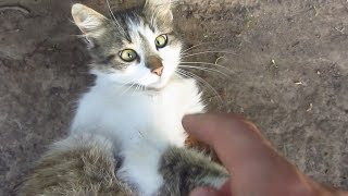 Download Kitten with cute eyes purrs on the street Video