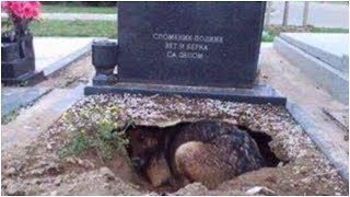 Download People Said This Dog Was Guarding Her Owner's Grave, But One Rescuer Uncovered A Stunning Secret Video