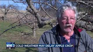 Download Cold weather may delay apple crop at local orchards Video