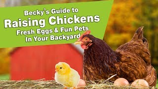 Download Becky's Guide to Raising Chickens - Fresh Eggs & Fun Pets In Your Backyard Video