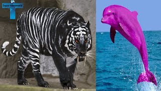 Download Top 10 Animals With The Most Unique Color Mutations on Earth Animals That Are The Wrong Color Video