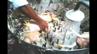 Download peladora de pollos 1000 / hora. inoxidables cordova..wmv Video