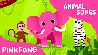 Download Animals, Animals | Animal Songs | PINKFONG Songs for Children Video