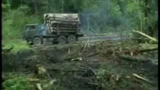 Download вырубка лесов Video