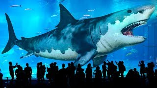 Download 10 Biggest Sharks Ever Existed (Meg Isn't Only the Largest!) Video