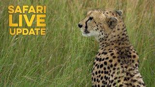 Download Kakenya a female cheetah shows us how hunting is done! Video